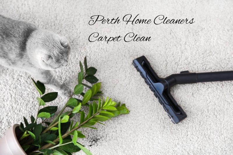 A Guide To Professional Carpet Cleaning