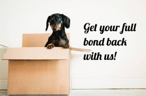 daschund in a cardboard box with caption get your full bond back with us