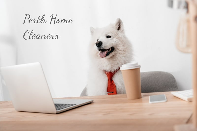 white dog wearing red tie sitting on an office chair, looking at laptop computer with a takeaway coffee next to him