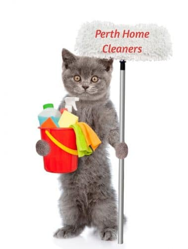 A grey cat standing on its hind legs, looking at the camera. It is holding a mop in its left paw and a red bucket in its right paw. In the bucket are rags and sponges and bottles of cleaning fluid. Printed on the mop is the words Perth Home Cleaners