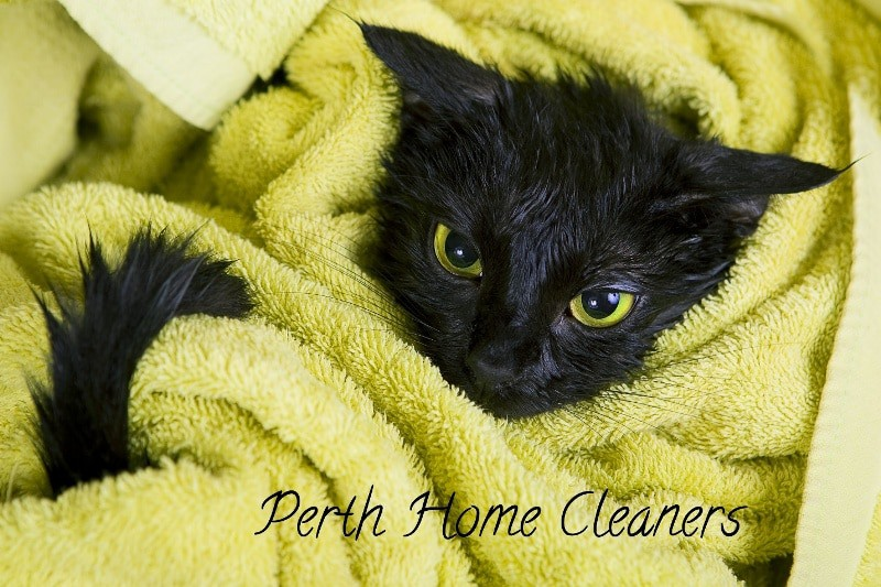 A freshly-washed black kitten wrapped in a lime-green towel. The caption is Perth Home Cleaners