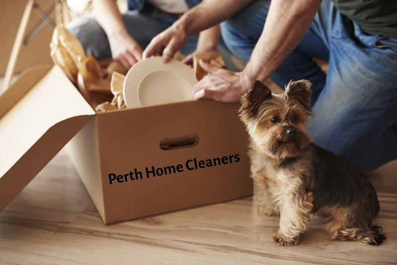 Two people packing plates into a cardboard box. A yorkshire terrier pup is next to one of the people and looking away from the box. The box has the words Perth Home Cleaners printed on the side.