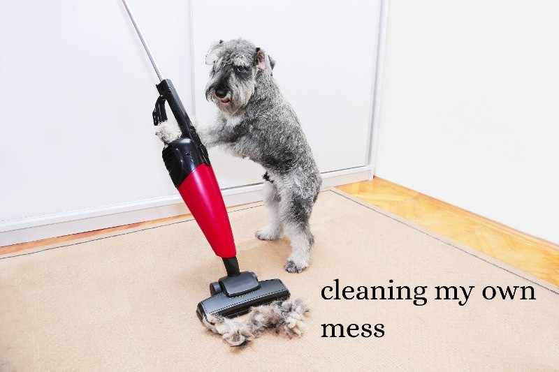 A dog operating a vacuum on a beige carpet with the caption cleaning my own mess
