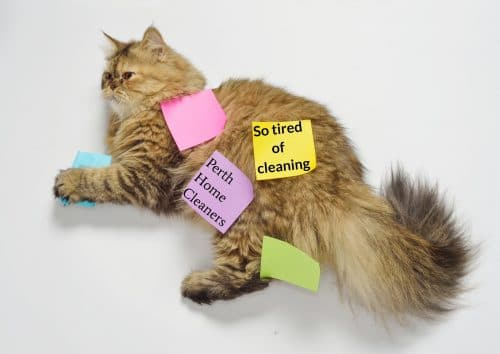 long-haired brown cat lying on a white floor with five different coloured postit notes on it. Three of the postit notes are blank. A purple postit note reads Perth Home Cleaners and a yellow one reads so tired of cleaning