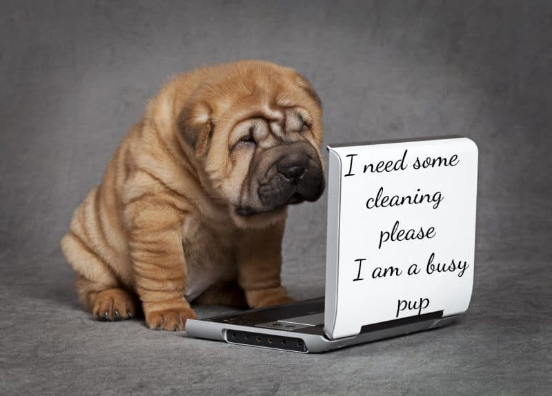 A shar pei puppy is standing on a grey felt floor, looking at an open laptop. On the lid of the laptop is written I need some cleaning please I am a busy pup.