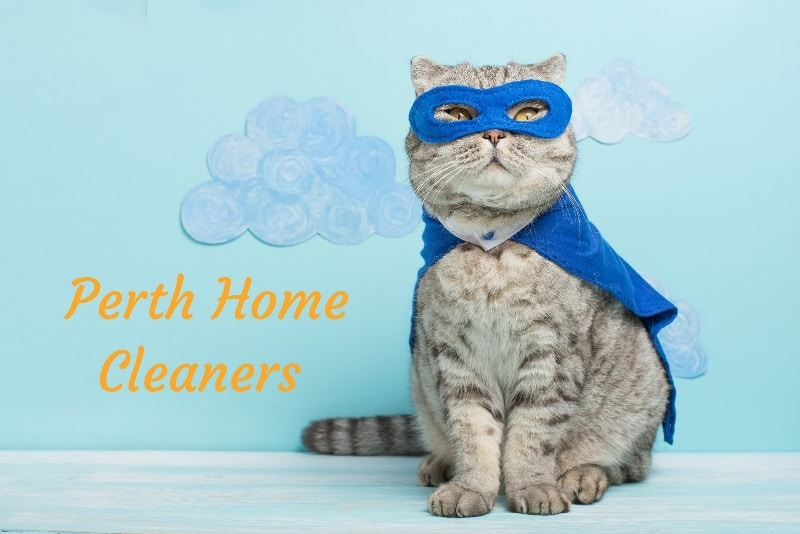 A light-grey house cat with a blue superhero mask and blue cape is standing and looking at the camera. Hand-drawn clouds are stuck onto a blue wall behind the cat. The words Perth Home Cleaners are in orange on the wall next to the cat