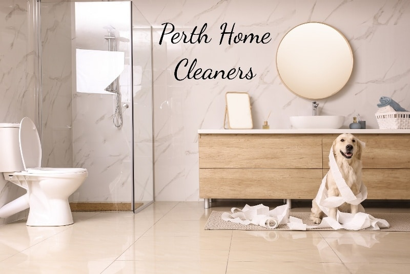 labrador playing in toilet rolls inside a clean, modern bathroom. The toilet seat is up. The shower has clear glass walls. The wood panelled dresser is behind the labrador. On the dresser is a basin, a large circular mirror and a smaller rectangular mirror. The words Perth Home Cleaners is in black on the white marbled wall