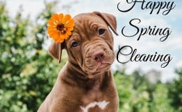 Brown puppy with an orange flower in its hair saying happy spring cleaning
